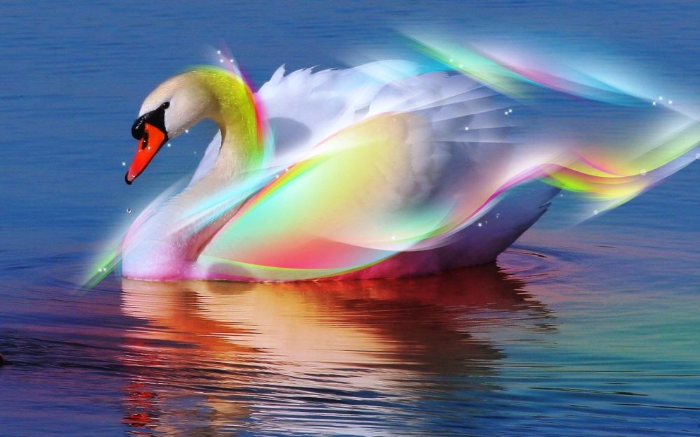 Beautiful Swan1